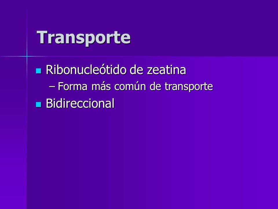 Transporte Ribonucleótido de zeatina Bidireccional