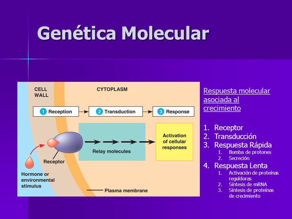 Genética Molecular Respuesta molecular asociada al crecimiento