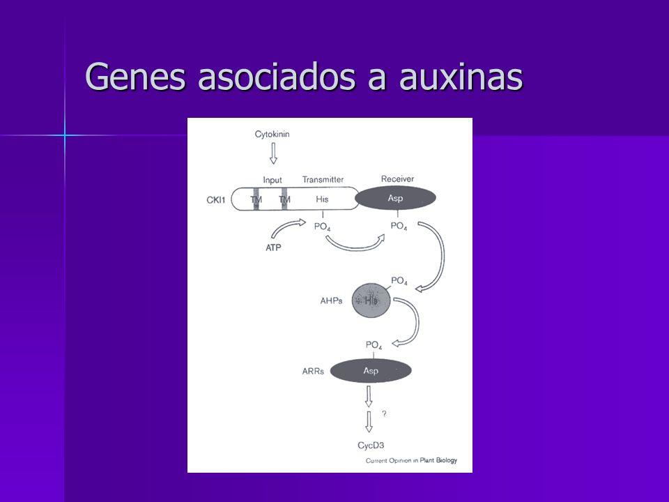 Genes asociados a auxinas