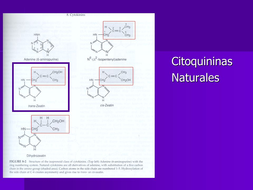 Citoquininas Naturales