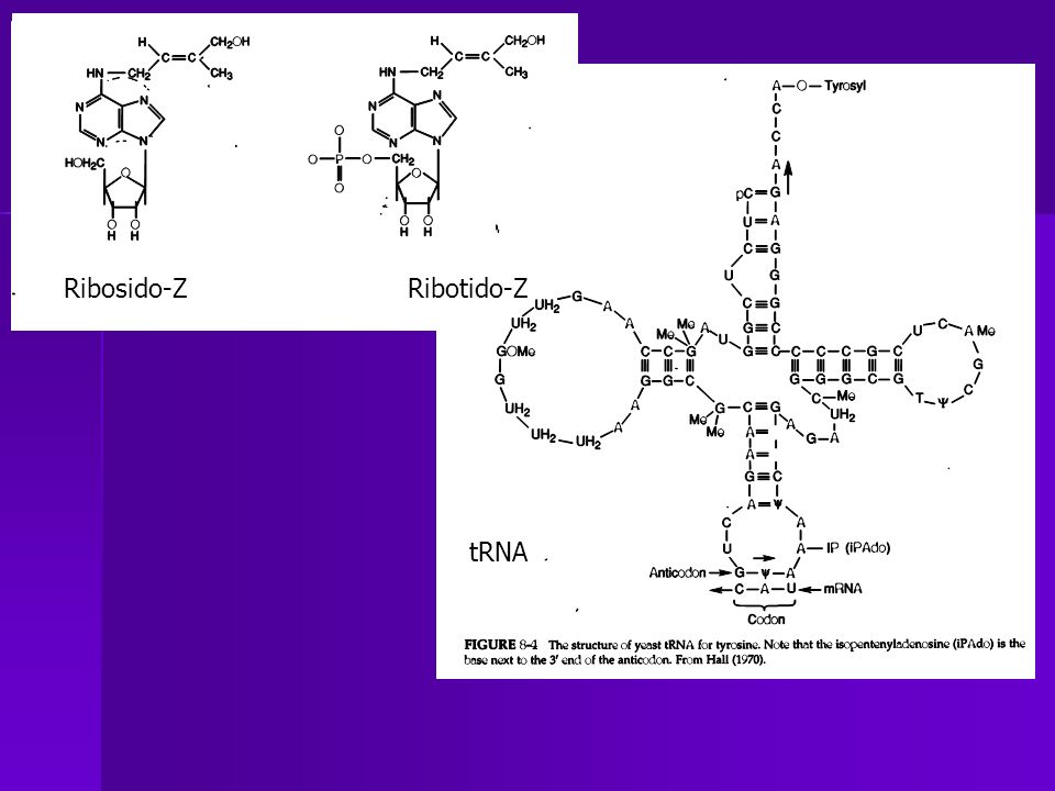 Ribosido-Z Ribotido-Z
