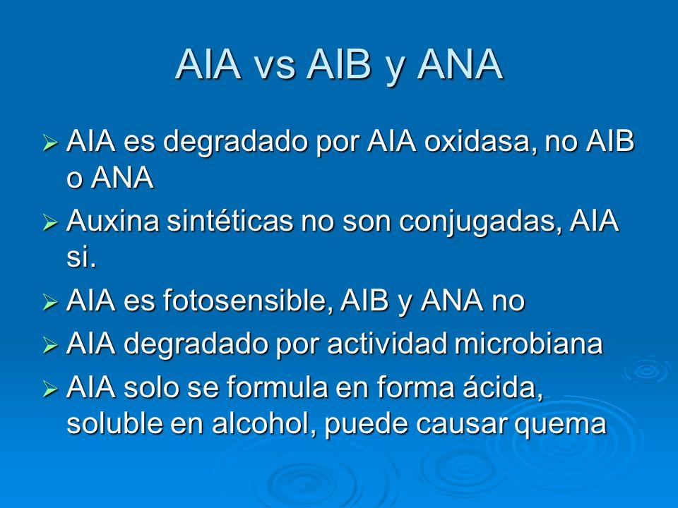 AIA vs AIB y ANA AIA es degradado por AIA oxidasa, no AIB o ANA