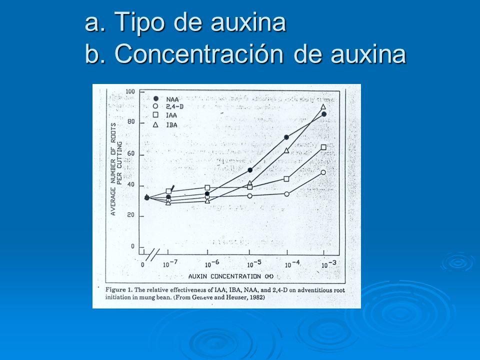 a. Tipo de auxina b. Concentración de auxina