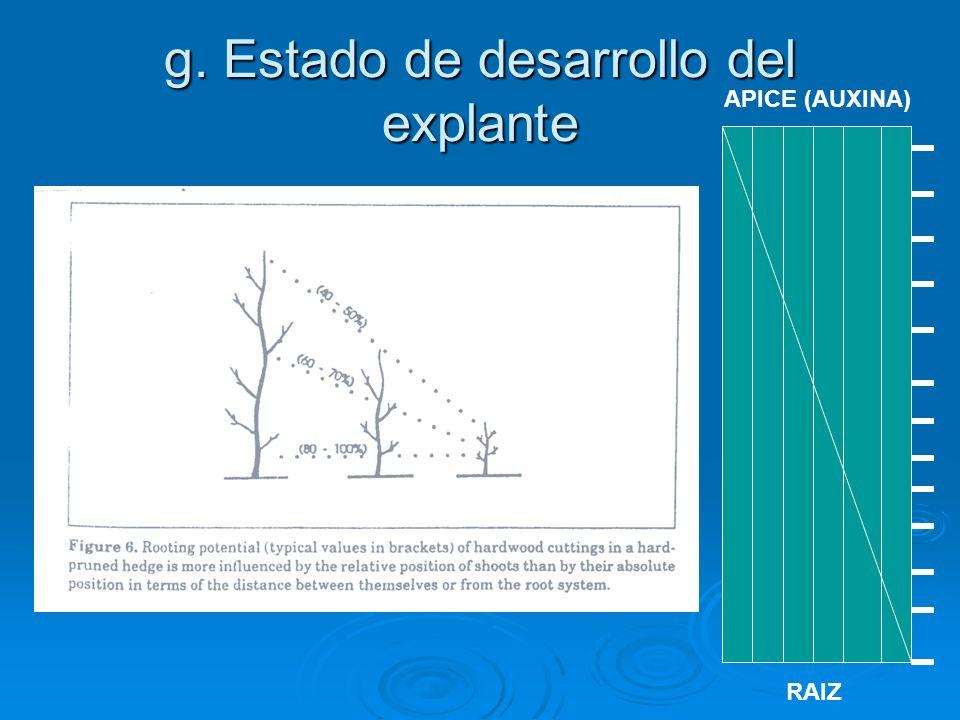 g. Estado de desarrollo del explante