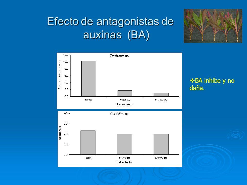Efecto de antagonistas de auxinas (BA)