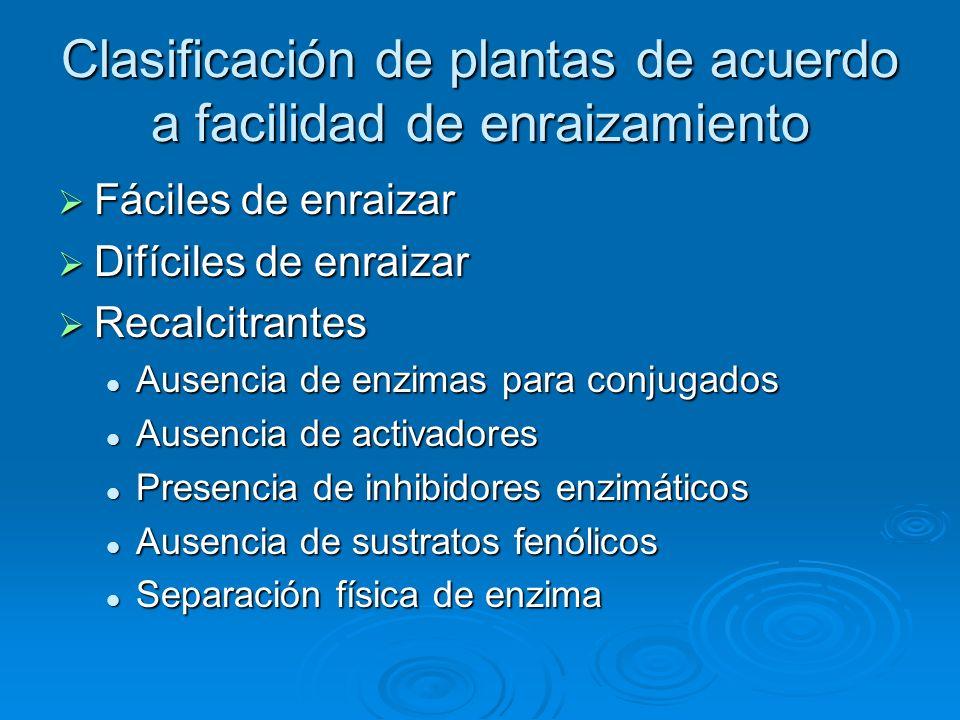 Clasificación de plantas de acuerdo a facilidad de enraizamiento
