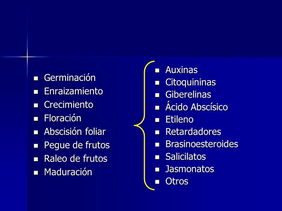 Auxinas Citoquininas. Giberelinas. Ácido Abscísico. Etileno. Retardadores. Brasinoesteroides. Salicilatos.