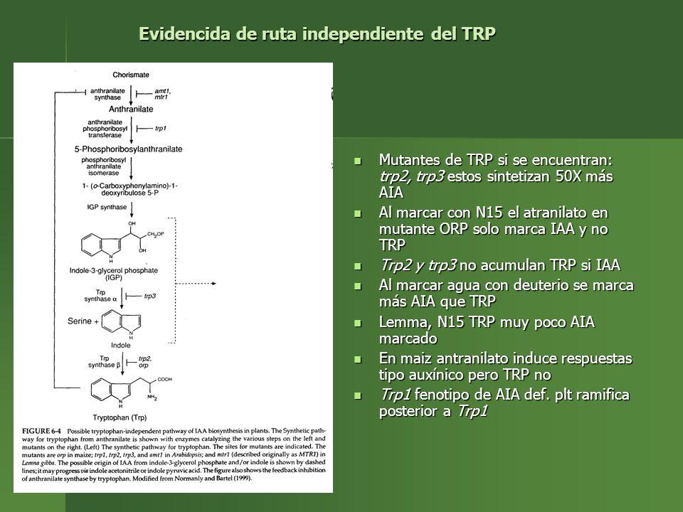 Evidencida de ruta independiente del TRP