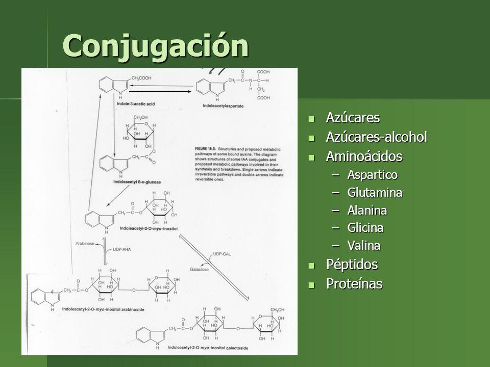 Conjugación Azúcares Azúcares-alcohol Aminoácidos Péptidos Proteínas