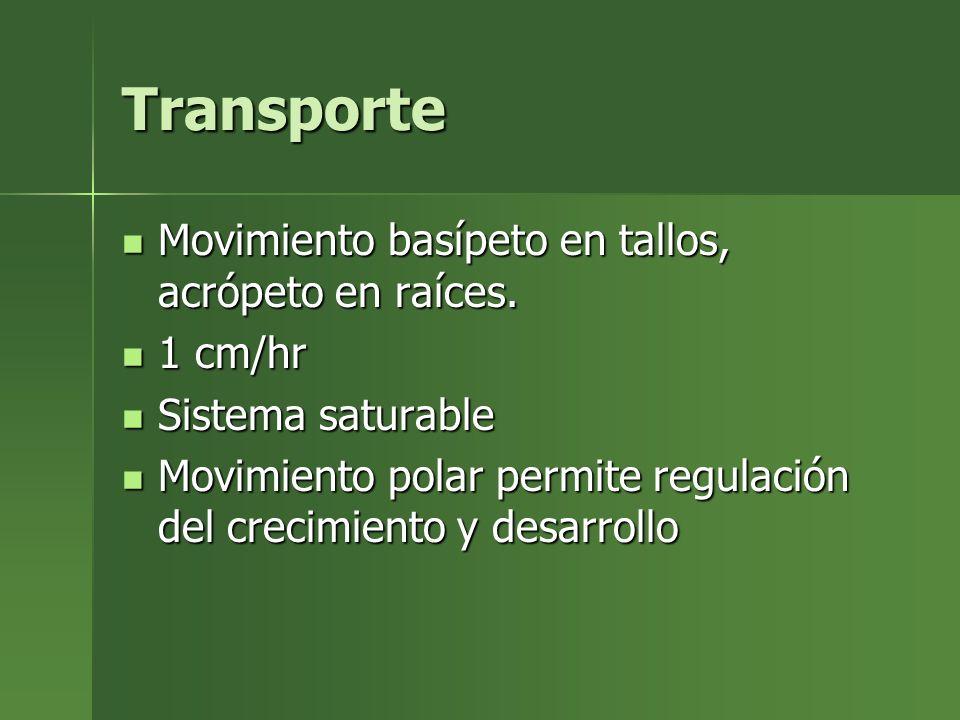 Transporte Movimiento basípeto en tallos, acrópeto en raíces. 1 cm/hr