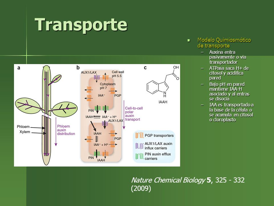 Transporte Nature Chemical Biology 5, 325 - 332 (2009)