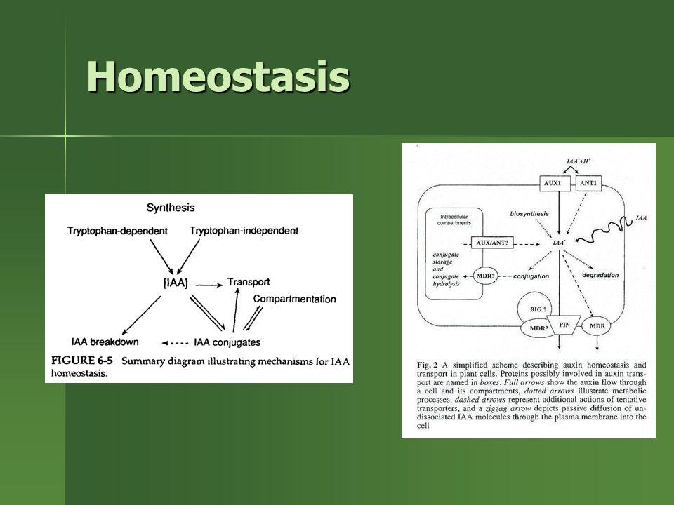 Homeostasis Evidencia de homeostasis