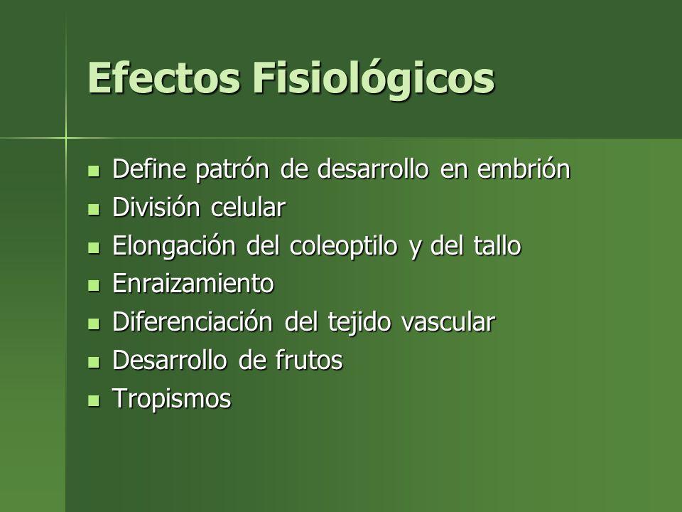 Efectos Fisiológicos Define patrón de desarrollo en embrión