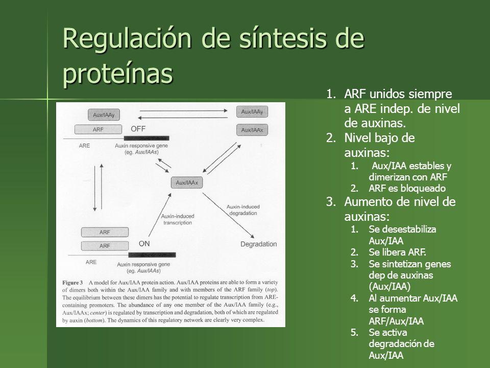 Regulación de síntesis de proteínas