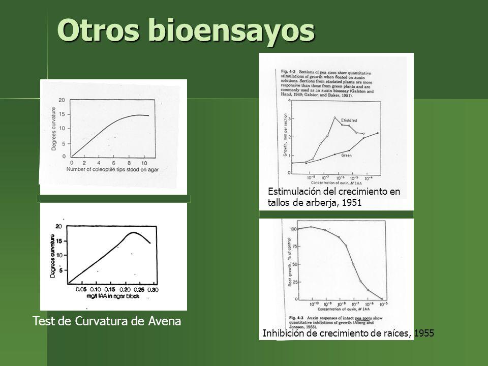 Otros bioensayos Test de Curvatura de Avena