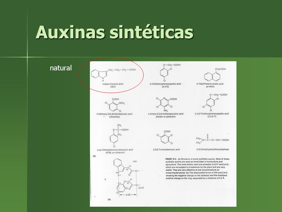 Auxinas sintéticas natural