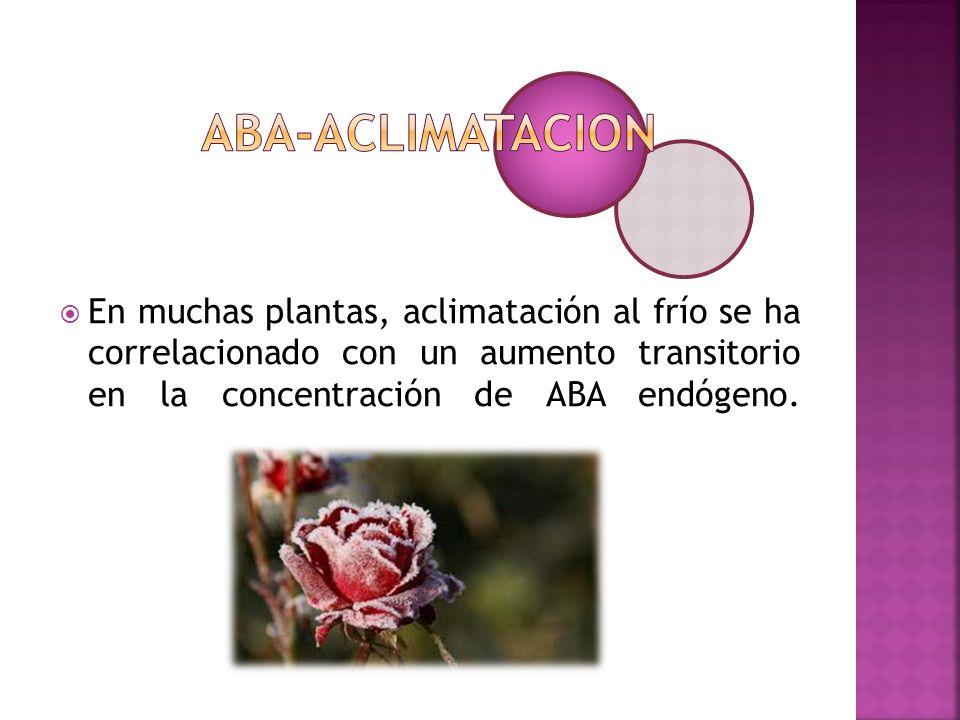 ABA-ACLIMATACION En muchas plantas, aclimatación al frío se ha correlacionado con un aumento transitorio en la concentración de ABA endógeno.