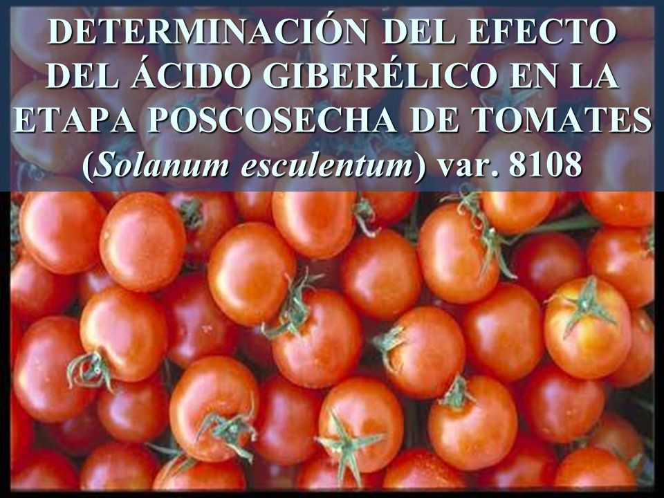 DETERMINACIÓN DEL EFECTO DEL ÁCIDO GIBERÉLICO EN LA ETAPA POSCOSECHA DE TOMATES (Solanum esculentum) var.