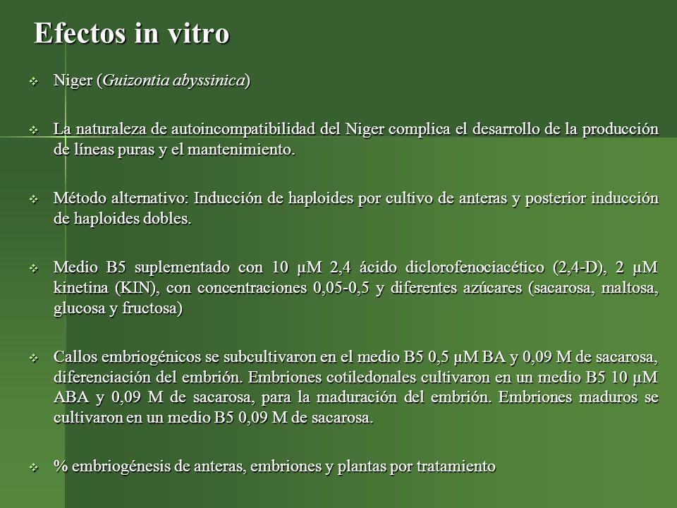 Efectos in vitro Niger (Guizontia abyssinica)