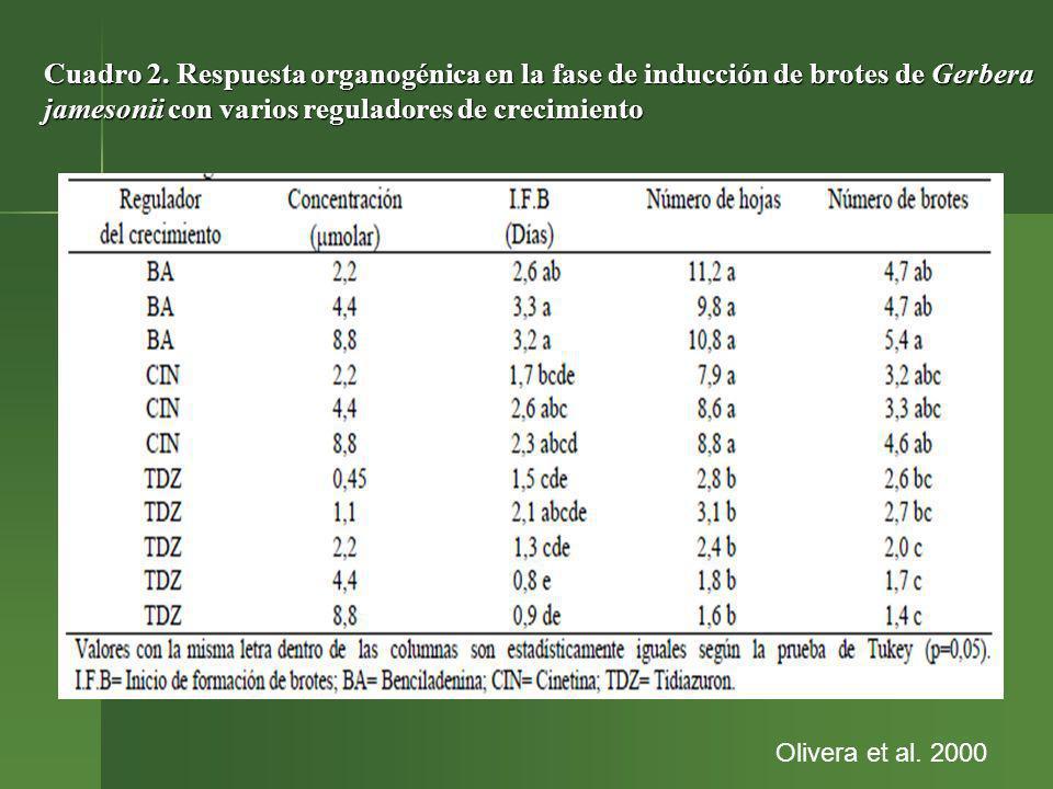 Cuadro 2. Respuesta organogénica en la fase de inducción de brotes de Gerbera jamesonii con varios reguladores de crecimiento