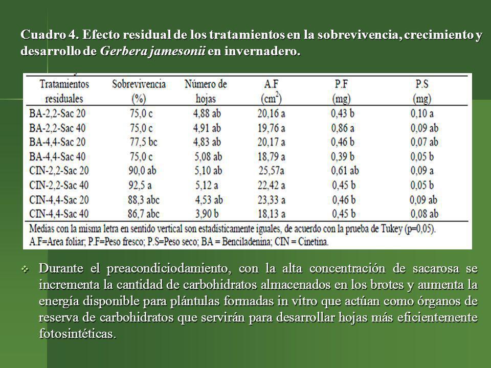 Cuadro 4. Efecto residual de los tratamientos en la sobrevivencia, crecimiento y desarrollo de Gerbera jamesonii en invernadero.