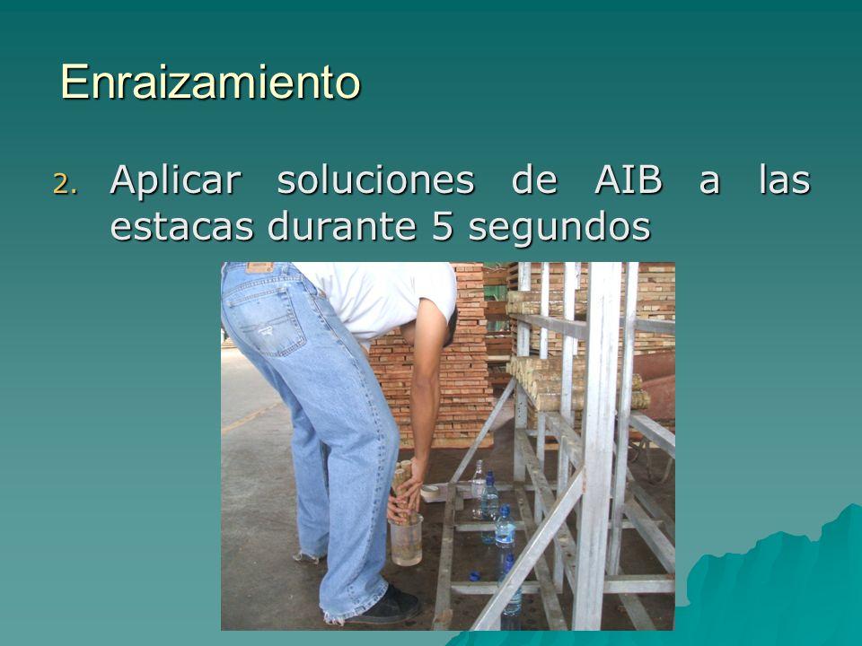 Enraizamiento Aplicar soluciones de AIB a las estacas durante 5 segundos