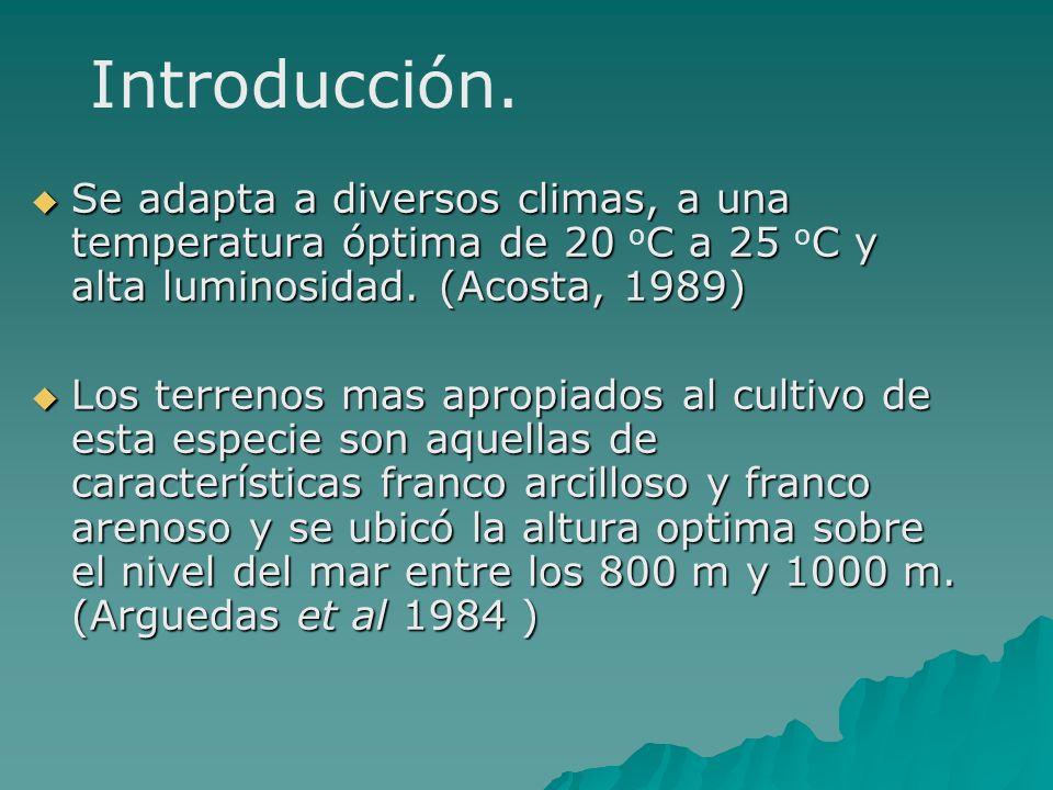 Introducción. Se adapta a diversos climas, a una temperatura óptima de 20 oC a 25 oC y alta luminosidad. (Acosta, 1989)