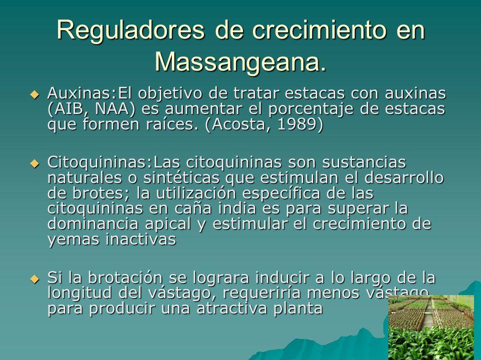 Reguladores de crecimiento en Massangeana.