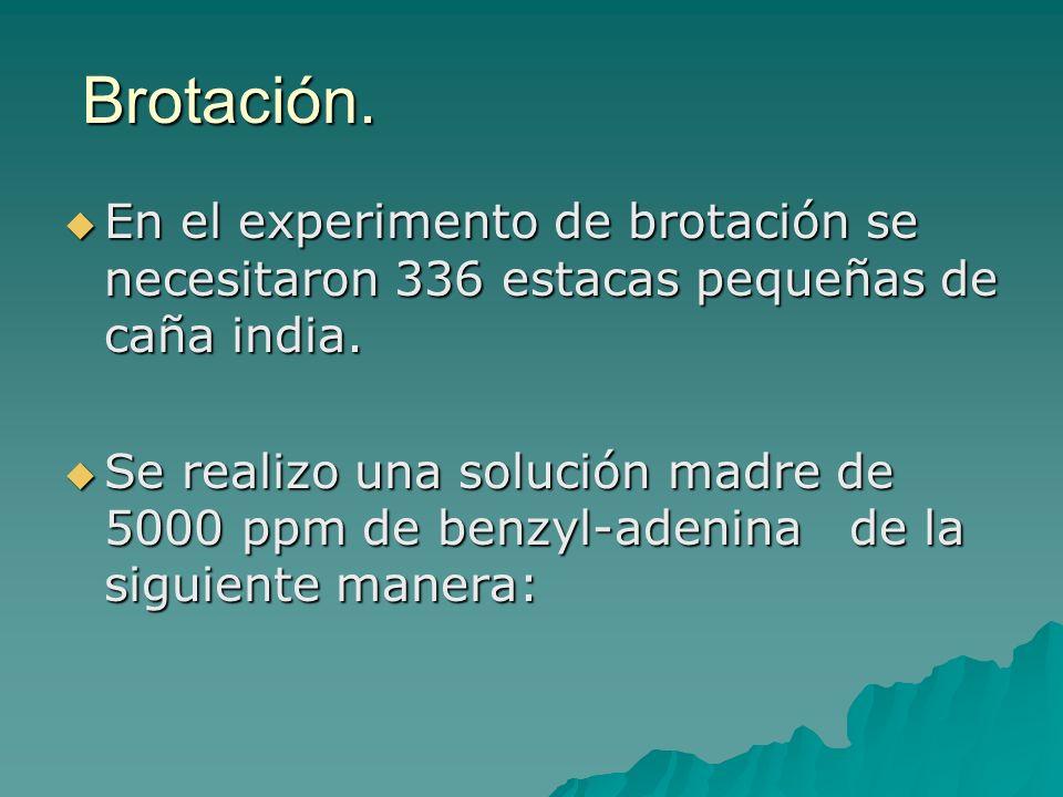 Brotación. En el experimento de brotación se necesitaron 336 estacas pequeñas de caña india.
