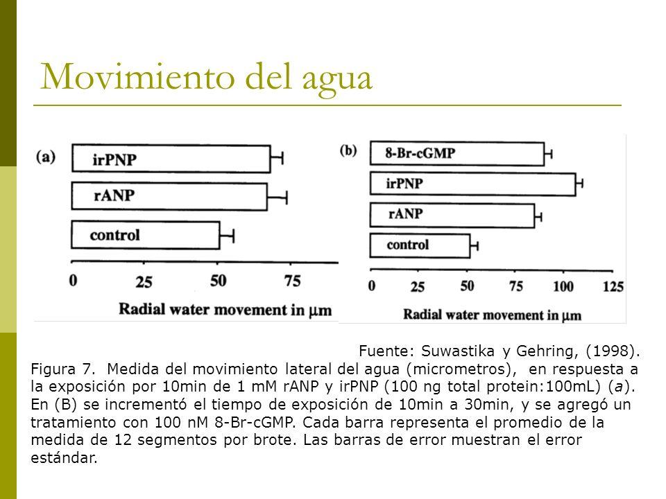 Movimiento del agua Fuente: Suwastika y Gehring, (1998).