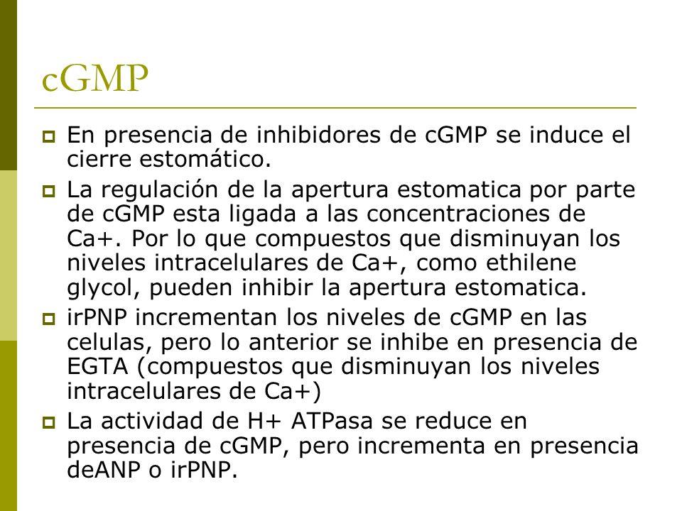 cGMP En presencia de inhibidores de cGMP se induce el cierre estomático.