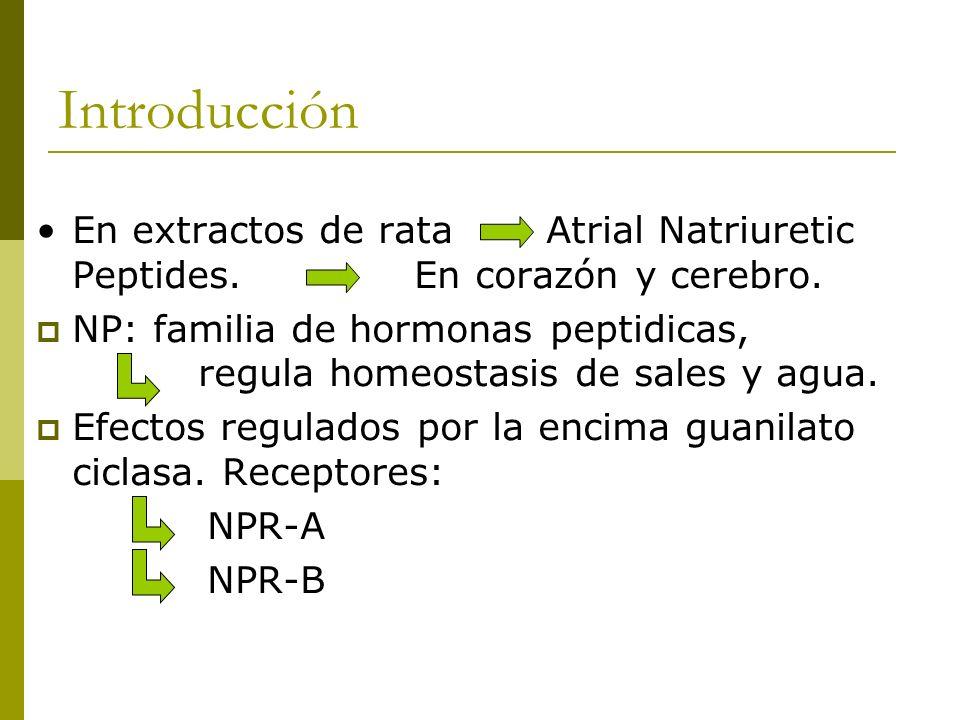 Introducción En extractos de rata Atrial Natriuretic Peptides. En corazón y cerebro.