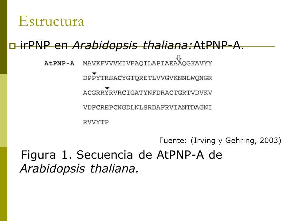 Estructura irPNP en Arabidopsis thaliana:AtPNP-A.