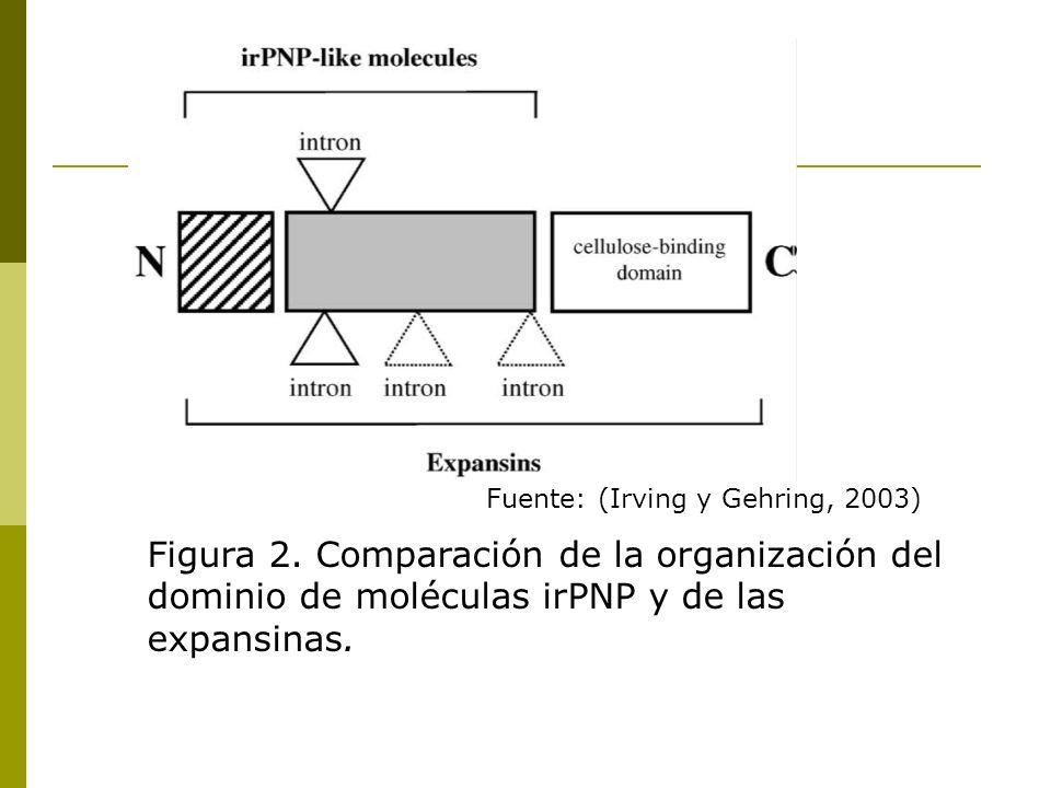 Fuente: (Irving y Gehring, 2003)