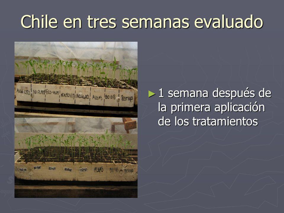 Chile en tres semanas evaluado