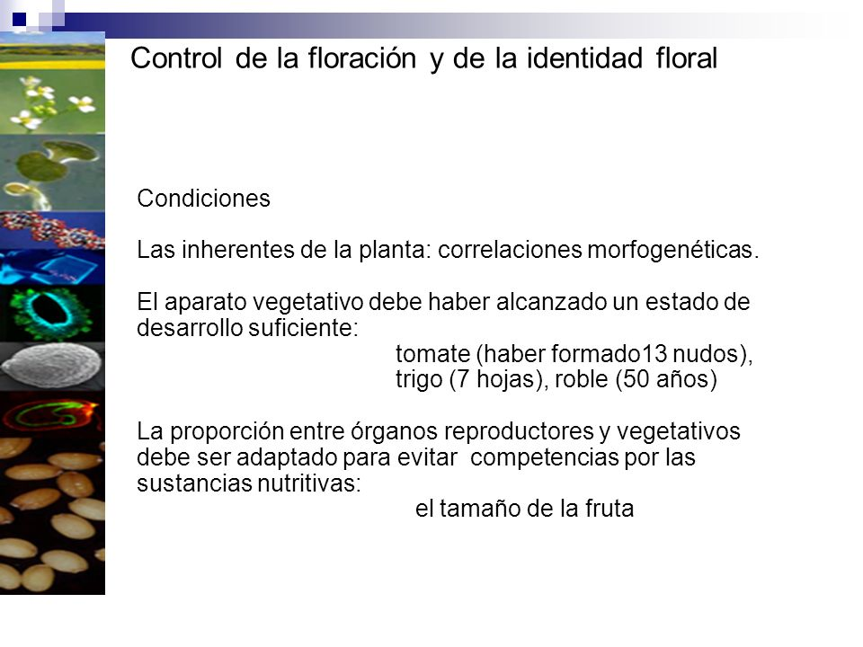 Control de la floración y de la identidad floral