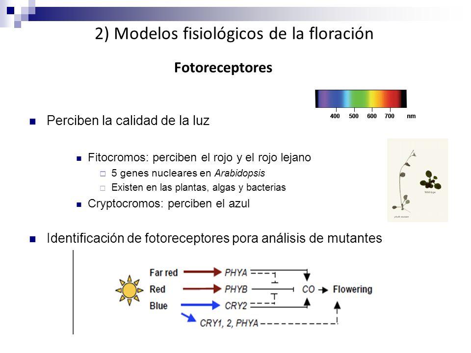 2) Modelos fisiológicos de la floración