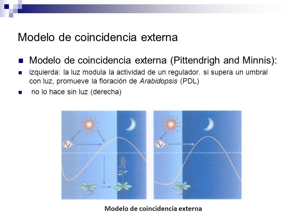 Modelo de coincidencia externa