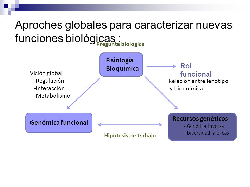 Aproches globales para caracterizar nuevas funciones biológicas :