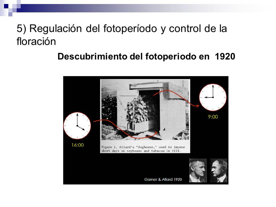 5) Regulación del fotoperíodo y control de la floración