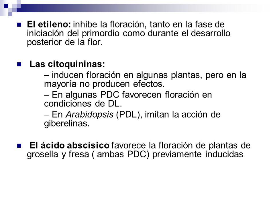El etileno: inhibe la floración, tanto en la fase de iniciación del primordio como durante el desarrollo posterior de la flor.