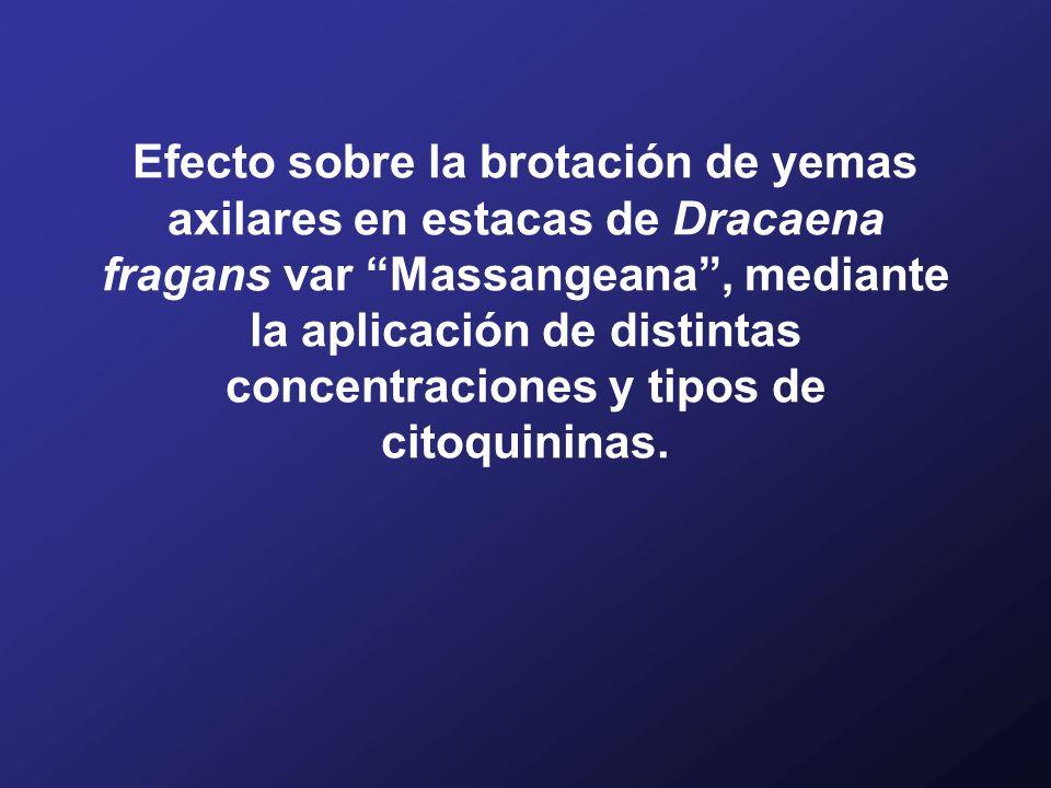 Efecto sobre la brotación de yemas axilares en estacas de Dracaena fragans var Massangeana , mediante la aplicación de distintas concentraciones y tipos de citoquininas.