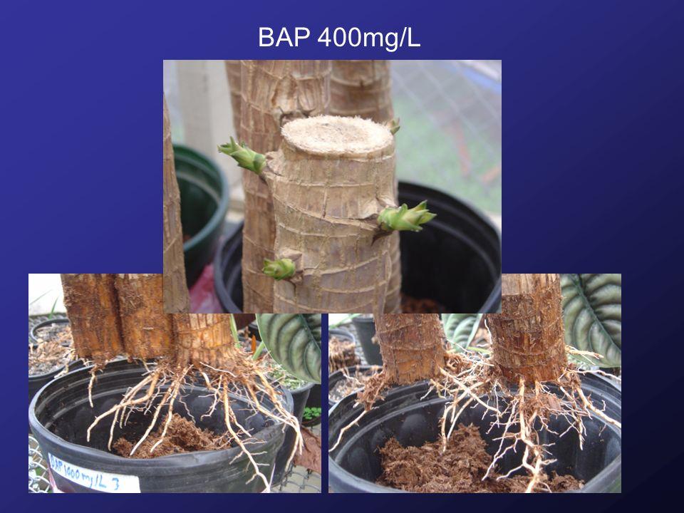BAP 400mg/L