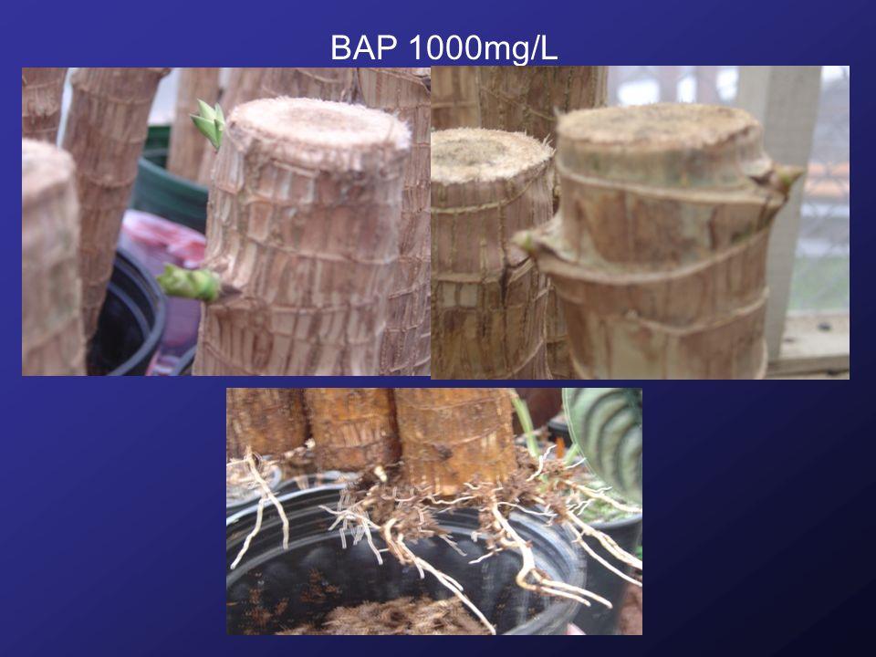 BAP 1000mg/L