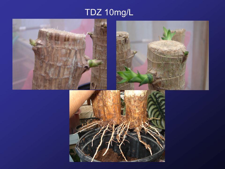 TDZ 10mg/L
