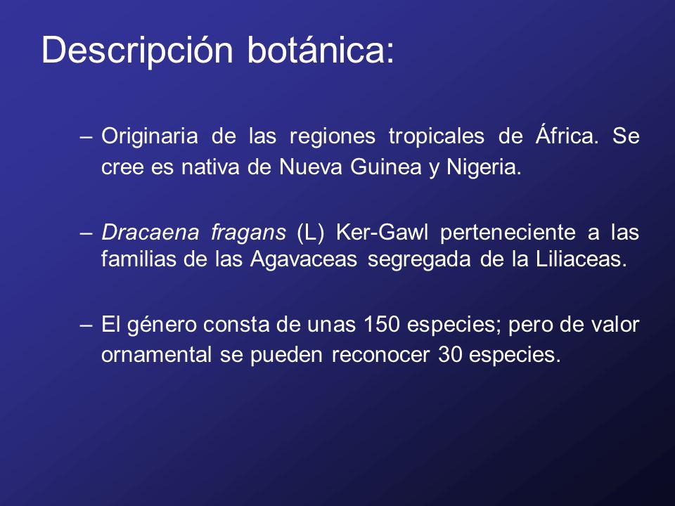 Descripción botánica:
