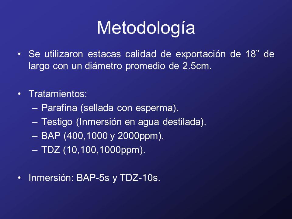 Metodología Se utilizaron estacas calidad de exportación de 18 de largo con un diámetro promedio de 2.5cm.