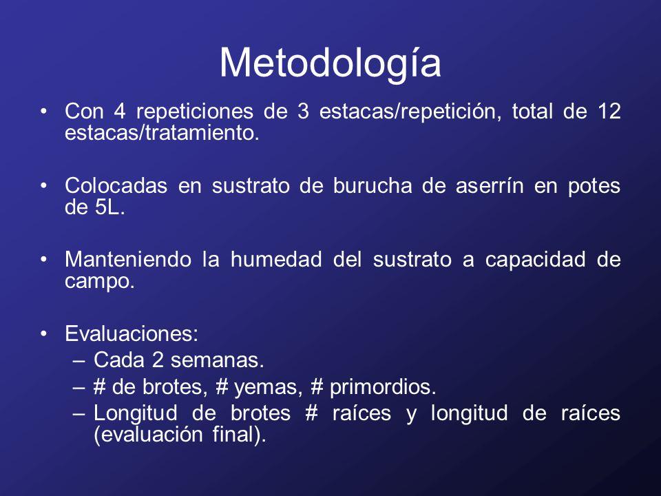 Metodología Con 4 repeticiones de 3 estacas/repetición, total de 12 estacas/tratamiento. Colocadas en sustrato de burucha de aserrín en potes de 5L.