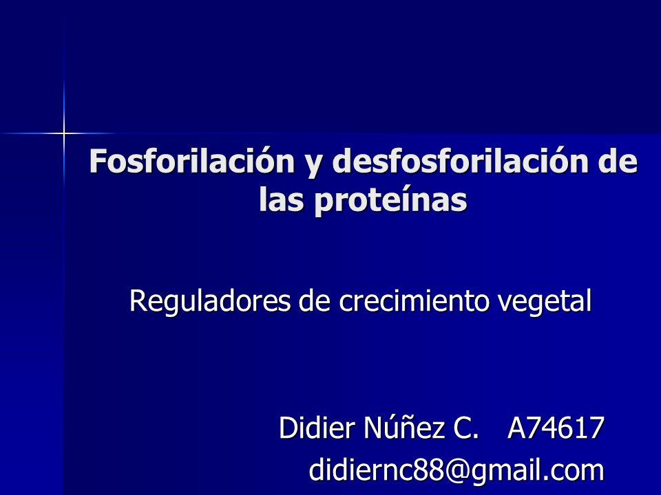 Fosforilación y desfosforilación de las proteínas