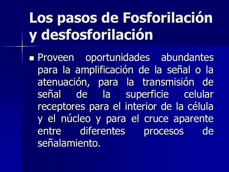 Los pasos de Fosforilación y desfosforilación